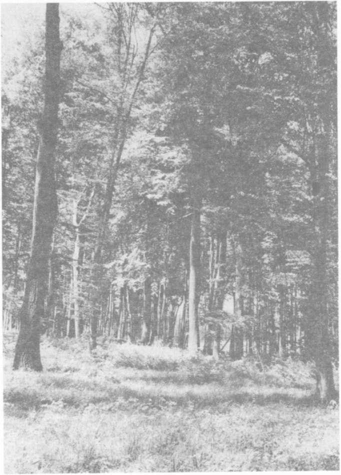 fák típusai megismerni, és meghatározza)